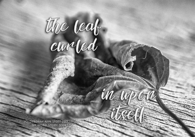Curled leaf sixws-small