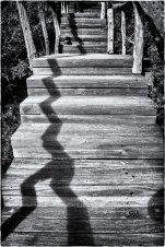 The ZigZag Shadow