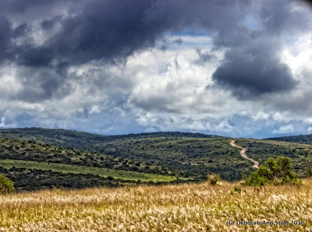 Addo landscape