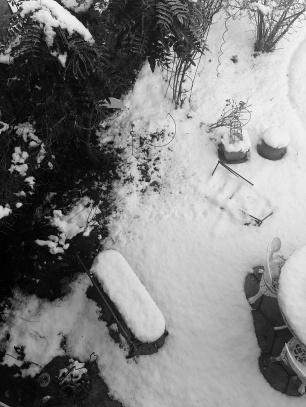 Snowy garden 1